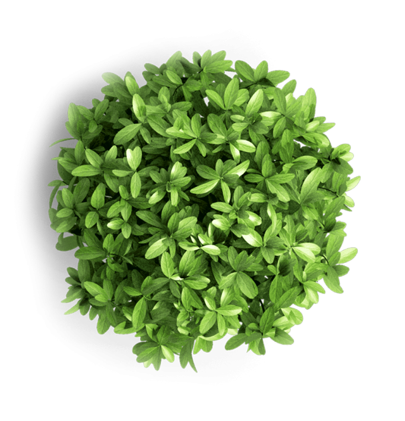 Green object plant png